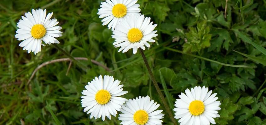 Nastartujte po zimě svůj organismus a připravte se na jaro