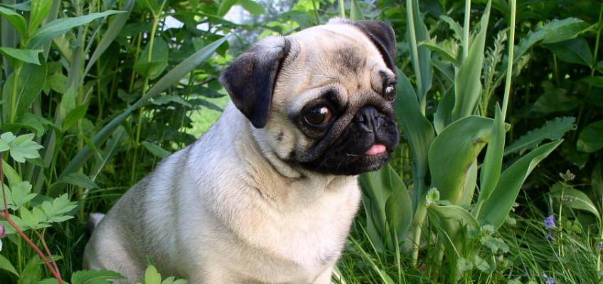 Mýtus: Blecha psí na člověka nejde? A co potom klíště?