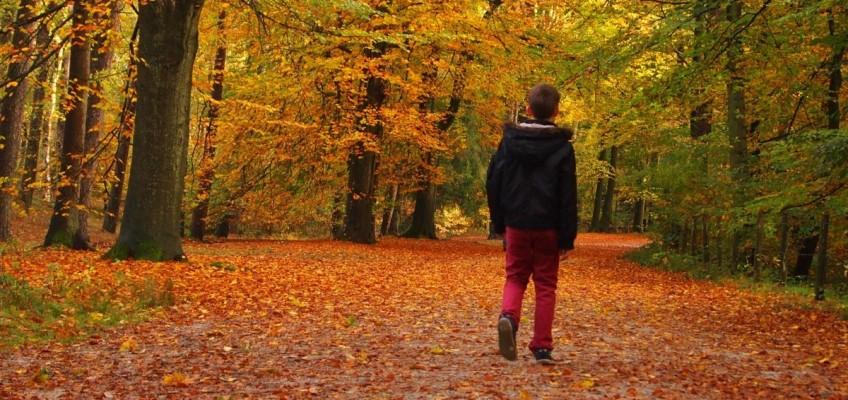 Připravte své tělo na rizikové podzimní období – silnou imunitu lze vybudovat kvalitní stravou