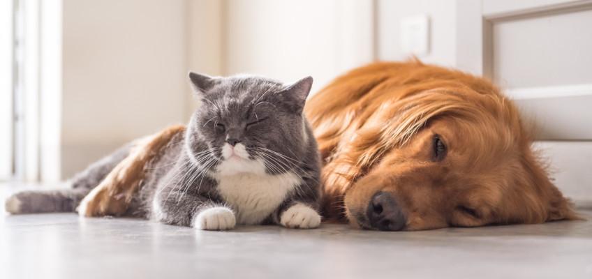 Sdílíte domácnost se zvířecími mazlíčky? Správný výběr podlahy vám společné bydlení usnadní!