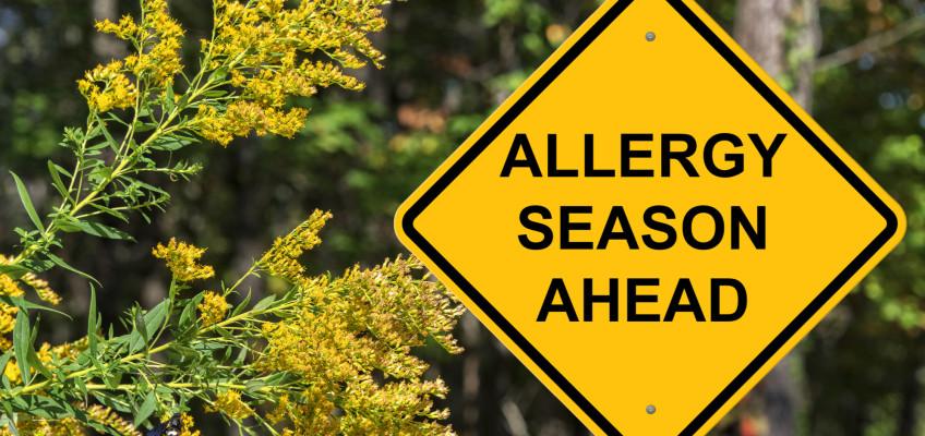 Jaro klepe na dveře, připravte se na každoroční boj s alergií