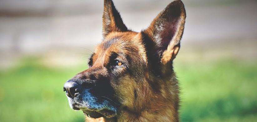 Jak vybrat pelíšek pro psa s ohledem na jeho potřeby