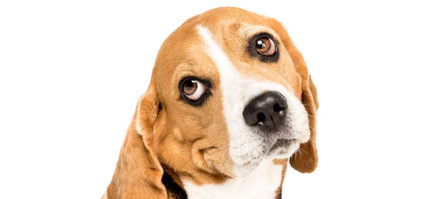 Dopřejte vašemu psímu mazlíčkovi prémiové krmení. Jak ho vybrat a neutratit za něj jmění?
