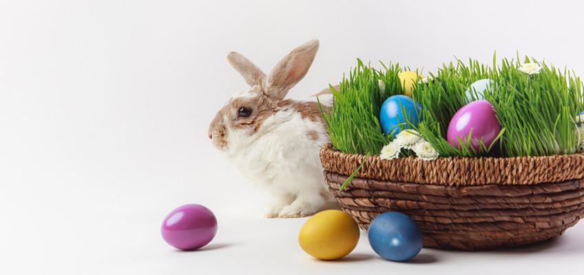 Blíží se Velikonoce, přichystejte si pro děti jarní tvoření